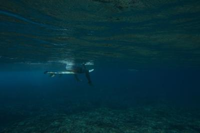 Underwater View of a Surfer Sitting on a Surfboard by Andy Bardon