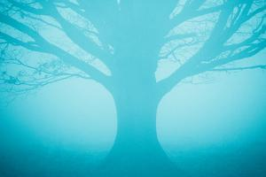 Blue Tree in Fog by Andy Bell