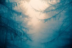 Forest Trees in Fog by Andy Bell