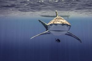 An Oceanic White Tip Shark Swims Above a Pilot Fish Off the Coast of Cat Island by Andy Mann