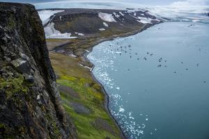 Little Auks and Glaucous Gulls from the Summit of Rubini Rock on Hooker Island by Andy Mann