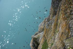 Little Auks Fly by Basalt Columns on Rubini Rock, Hooker Island by Andy Mann