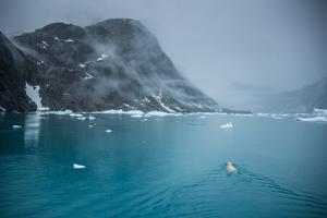 Polar Bear Swimming Through the Skoldungen Valley by Andy Mann