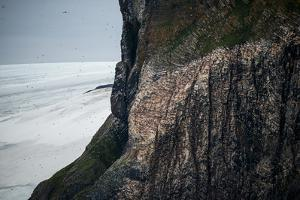 The Steep Face of Rubini Rock Supports Thousands of Nesting Pairs of Seabirds by Andy Mann