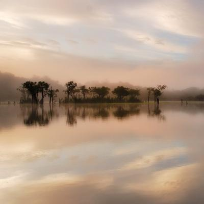 Dawn Mist on the Amazon by Andy Mumford