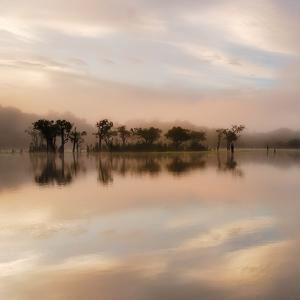 Dawn Mist on the Amazon by Andy Mumford