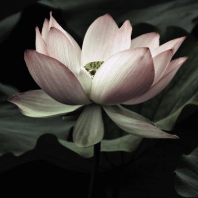The Lotus I by Andy Neuwirth