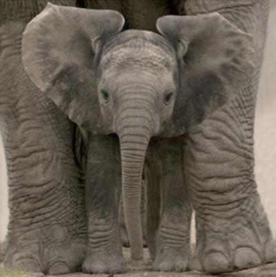 Big Ears by Andy Rouse