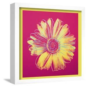 Daisy, c.1982 (Fuschia and Yellow) by Andy Warhol