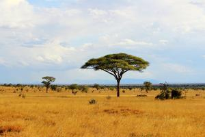 African Savannah Landscape by AndyCandy
