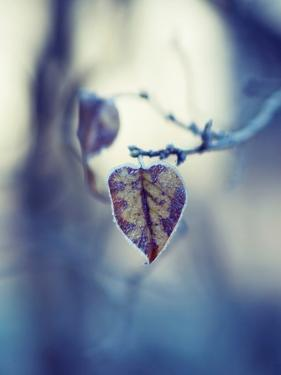 Frozen Love by Anette Schive