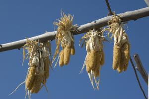 Corn Drying in the Sun at Fort Berthold, North Dakora by Angel Wynn