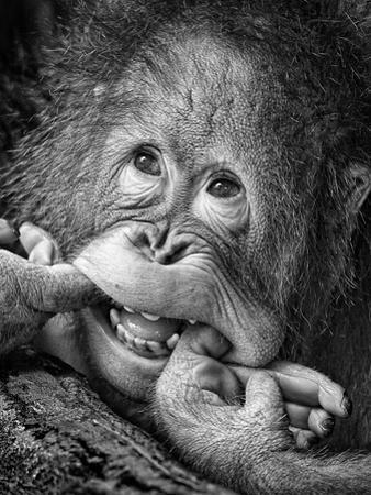 Big Smile.....Please