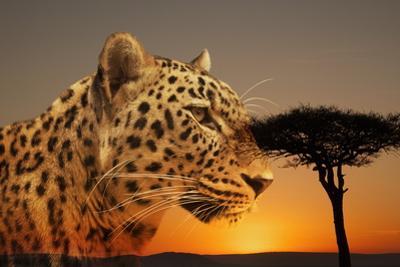 Cheetah, Masai Mara, Kenya, East Africa, Africa by Angelo Cavalli
