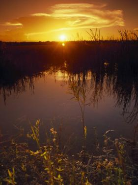 Everglades National Park, FL by Angelo Cavalli