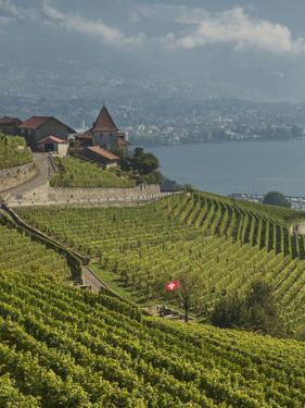Lavaux Terraced Vineyards on Lake Geneva, Montreux, Canton Vaud, Switzerland, Europe by Angelo Cavalli