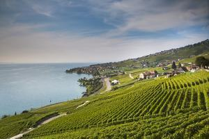 Lavaux Terraced Vineyards on Lake Geneva, Montreux, Canton Vaud, Switzerland, Europe by Angelo Cavalli