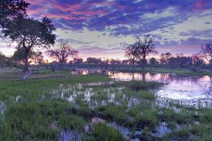 Okavango Delta, Botswana, Africa by Angelo Cavalli