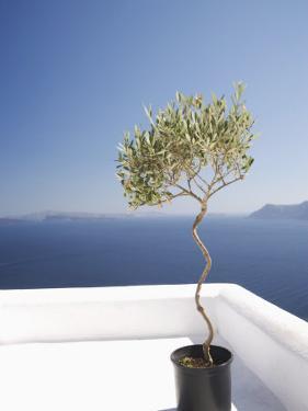 Santorini, Cyclades, Greek Islands, Greece, Europe by Angelo Cavalli