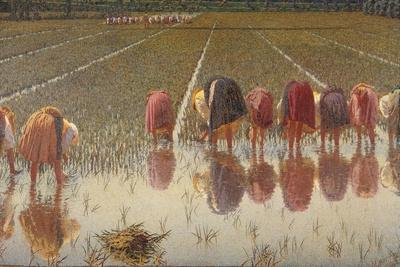 For 80 Cents, Row of Women Workers in a Rice Field, 1893