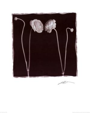 Two Flowers and Two Buds by Angelos Zimaras