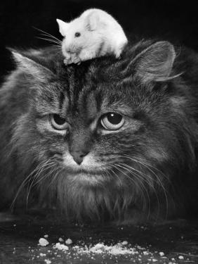 Animal Friendships: Cats and Mice