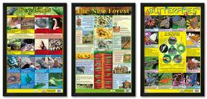 Animal Science Framed Poster Set