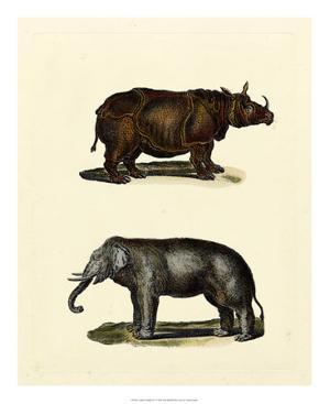 Animal Studies IV