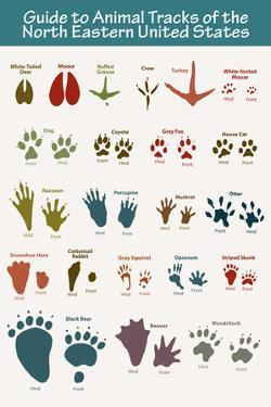 Animal Tracks of the North Eastern United States Plastic Sign
