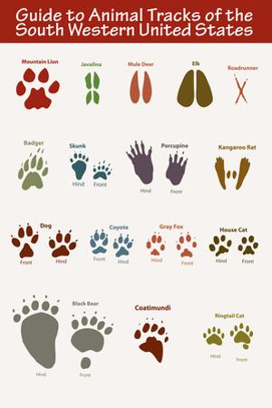 Animal Tracks of the South Western United States Art Poster Print