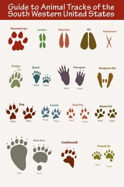 Animal Tracks of the South Western United States Plastic Sign