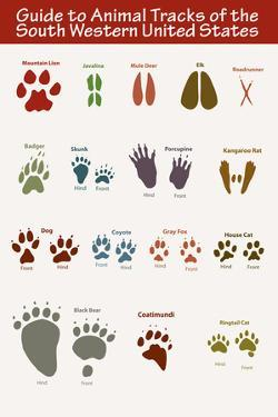 Animal Tracks of the South Western United States Poster