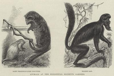 https://imgc.allpostersimages.com/img/posters/animals-at-the-zoological-society-s-gardens_u-L-PVWBJ10.jpg?p=0