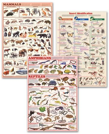 Animals Science Poster Set