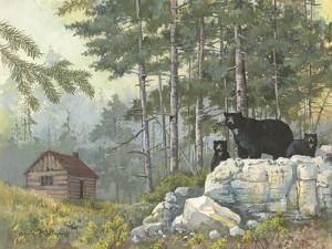 Bears Cabin by Anita Phillips
