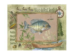 Blue-Gilled Sunfish by Anita Phillips