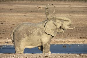 Elephant (Loxodonta Africana) Mudbathing, Etosha National Park, Namibia, Africa by Ann and Steve Toon