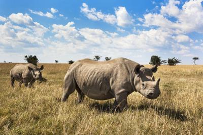 Rhinoceros, Ol Pejeta Conservancy, Laikipia, Kenya, East Africa, Africa by Ann and Steve Toon