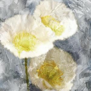 Poppy Blues 2 by Ann Bailey