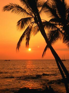 A Couple in Silhouette, Enjoying a Romantic Sunset Beneath the Palm Trees in Kailua-Kona, Hawaii by Ann Cecil