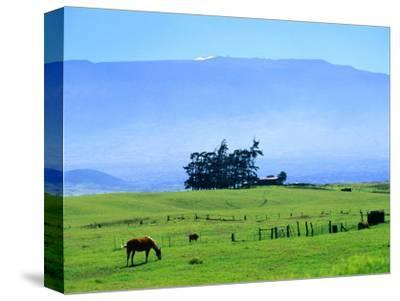 Horses Grazing Beneath the Towering Mauna Kea on Pastoral Parker Ranch at Waimea, Hawaii, USA by Ann Cecil