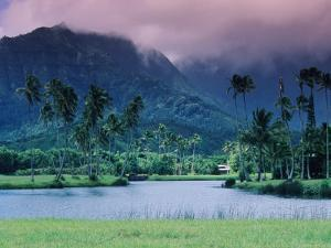 Looking across Tropical Landscape Up to Mt Waialeale from Hanalei by Ann Cecil