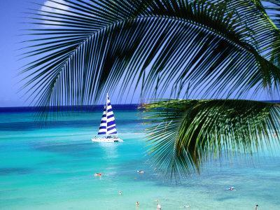 Palm Tree, Swimmers and a Boat at the Beach, Waikiki, U.S.A.