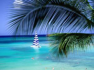 Palm Tree, Swimmers and a Boat at the Beach, Waikiki, U.S.A. by Ann Cecil