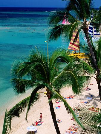 Palm Trees Over Waikiki Beach, Waikiki, U.S.A.
