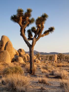USA, California, Joshua Tree National Park at Hidden Valley by Ann Collins