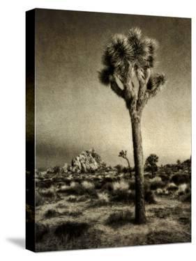 USA, California, Joshua Tree National Park, Dawn and Joshua trees by Ann Collins