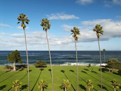 USA, California, La Jolla, Tall Palms at Scripps Park