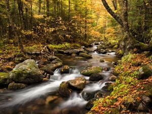 USA, New Hampshire, White Mountains, Fall color on Jefferson Brook by Ann Collins