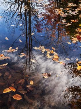 USA, New Hampshire, White Mountains, Fall reflections on Pemigewasset River by Ann Collins